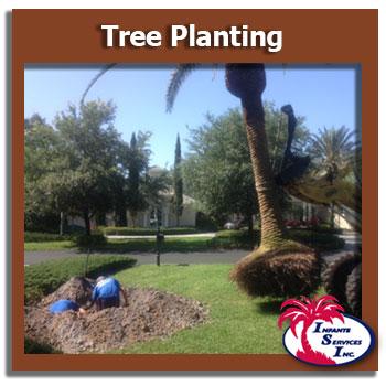 Tree Planting Tampa
